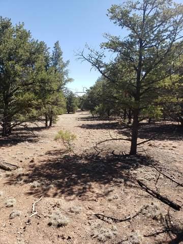184 Wilderness Circle, Datil, NM 87821 (MLS #990555) :: The Buchman Group