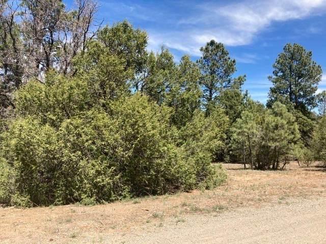 53 Apple Ranch Road, Tijeras, NM 87059 (MLS #991045) :: Keller Williams Realty