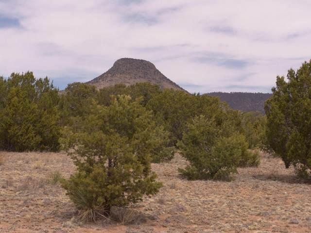 432 Southern Trail, Datil, NM 87821 (MLS #991733) :: Sandi Pressley Team
