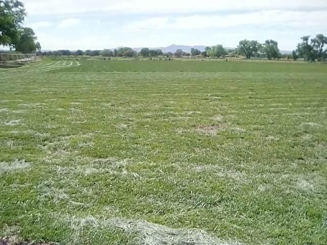 Hy 47 Adelino, Los Lunas, NM 87031 (MLS #992859) :: Sandi Pressley Team