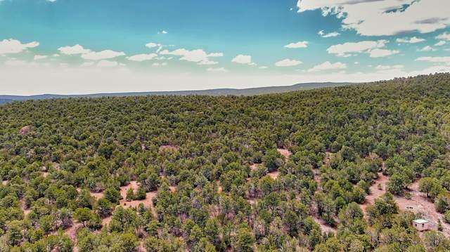 Land On Prairie Off Brannon Rd, Tijeras, NM 87059 (MLS #993125) :: Sandi Pressley Team