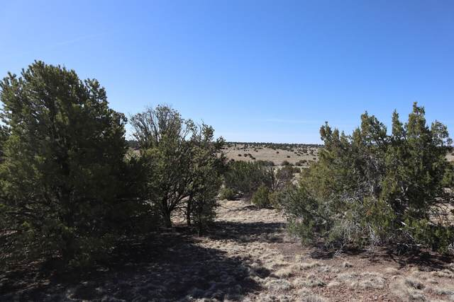 Horseshoe Trail #67, Quemado, NM 87829 (MLS #993237) :: Campbell & Campbell Real Estate Services