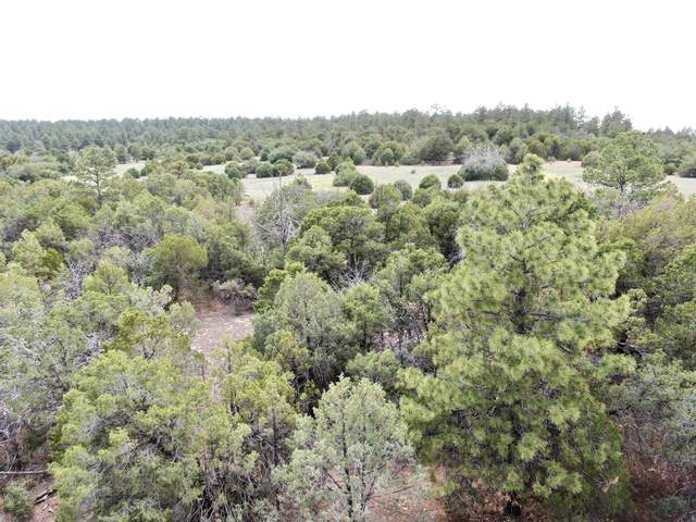San Isidro, Tijeras, NM 87059 (MLS #994012) :: Campbell & Campbell Real Estate Services