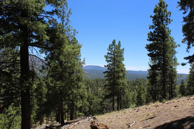 Turkey Trail, Jemez Springs, NM 87025 (MLS #994245) :: Campbell & Campbell Real Estate Services