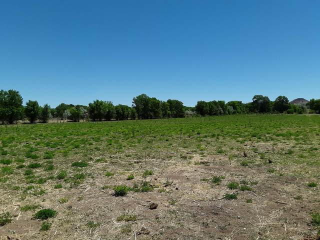 60 Acequia Road, Pena Blanca, NM 87041 (MLS #994363) :: Campbell & Campbell Real Estate Services