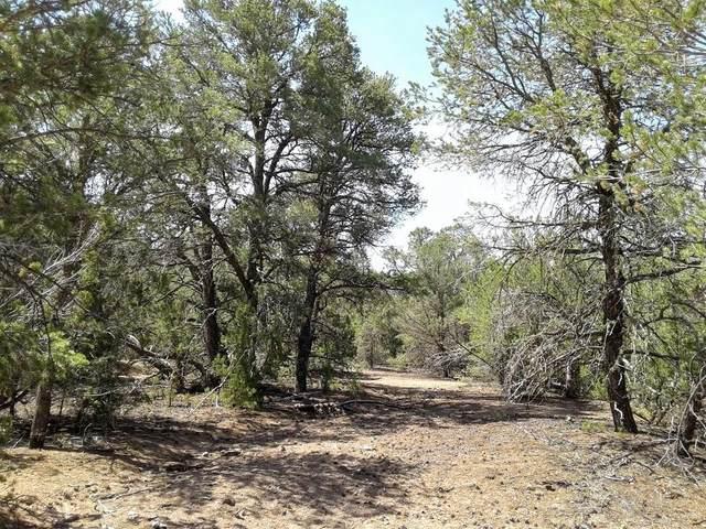 7 Jesse James Road, Edgewood, NM 87015 (MLS #994379) :: Keller Williams Realty