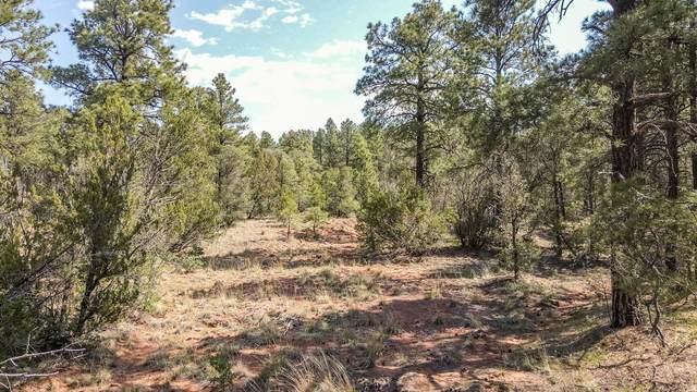 Santa Fe Trail Ranch, Las Vegas, NM 87701 (MLS #995870) :: Sandi Pressley Team