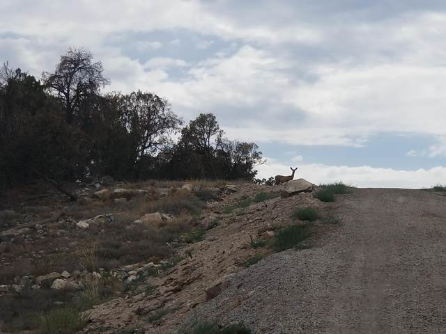 262 - 286 Nugent Road Road, Edgewood, NM 87015 (MLS #995919) :: Keller Williams Realty