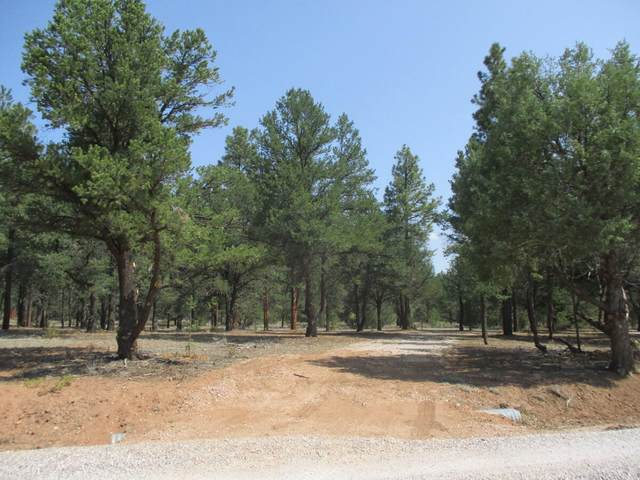 Lot 41 W Elk Drive, Ramah, NM 87321 (MLS #997289) :: Sandi Pressley Team