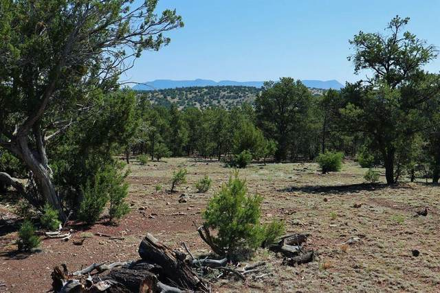43 Papoose Place, Datil, NM 87821 (MLS #997751) :: Campbell & Campbell Real Estate Services