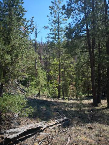 0 Little Bear Road, Grants, NM 87020 (MLS #998714) :: Campbell & Campbell Real Estate Services