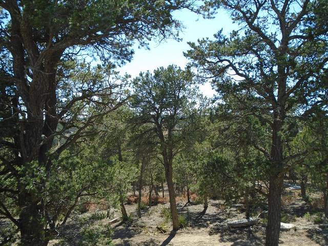 37 Nm 217, Tijeras, NM 87059 (MLS #890429) :: Berkshire Hathaway HomeServices Santa Fe Real Estate