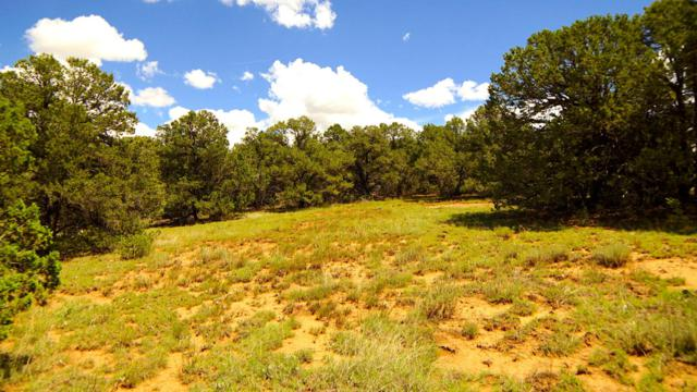 24 San Pedro View, Tijeras, NM 87059 (MLS #897671) :: Campbell & Campbell Real Estate Services