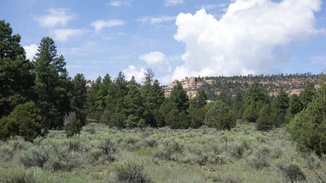 Lot 3 E Lobo Drive, Ramah, NM 87321 (MLS #900431) :: The Buchman Group