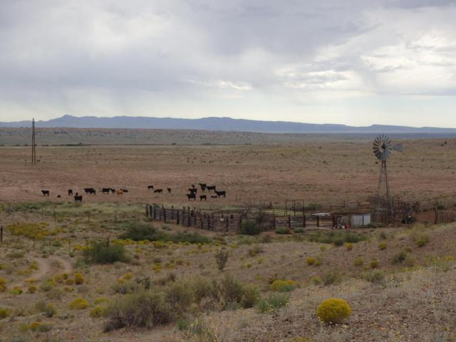 Rio Puerco Ranch, Bosque, NM 87006 (MLS #901947) :: Campbell & Campbell Real Estate Services