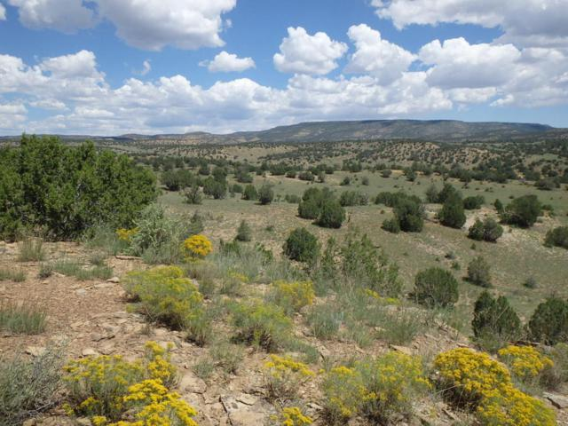 Cabin Springs Ranch, Pie Town, NM 87827 (MLS #906565) :: Campbell & Campbell Real Estate Services