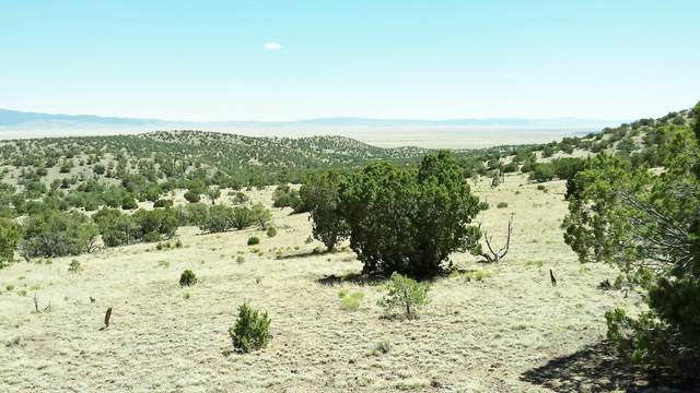 43 Rock Springs Loop, Datil, NM 87821 (MLS #909189) :: Campbell & Campbell Real Estate Services