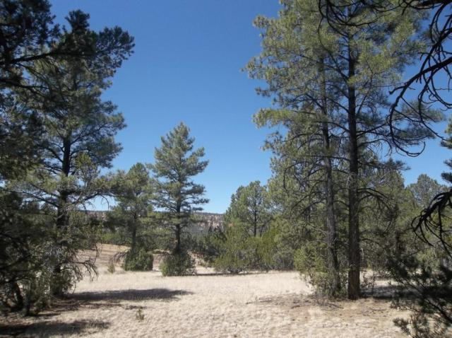 Lot 15 Blackbear Road, Ramah, NM 87321 (MLS #919621) :: Will Beecher at Keller Williams Realty