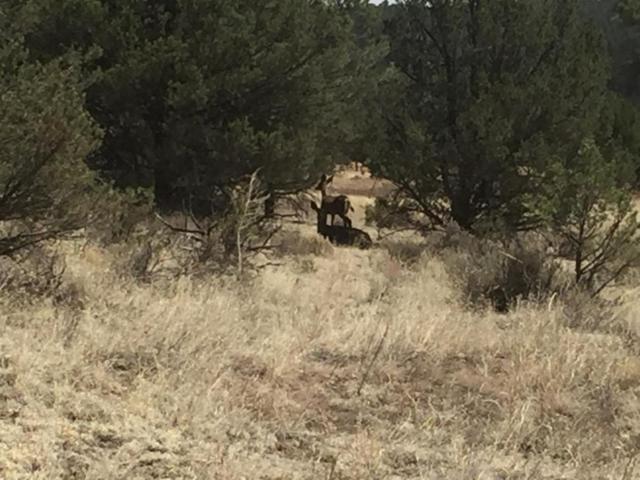 Lot 1 E Elk Drive, Ramah, NM 87321 (MLS #920609) :: Will Beecher at Keller Williams Realty