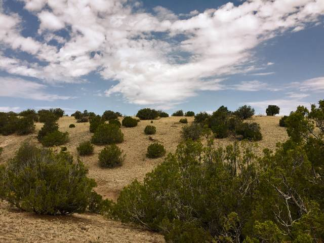 81 Pinon Springs Ranch, Magdalena, NM 87825 (MLS #923456) :: The Bigelow Team / Red Fox Realty