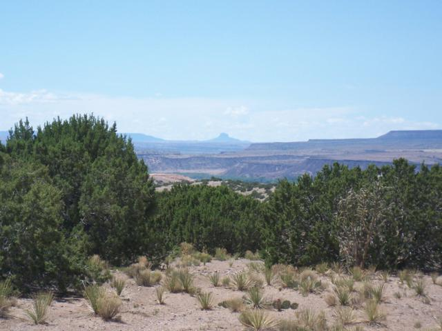 Palomar Rd - Lot 23, Placitas, NM 87043 (MLS #924086) :: Campbell & Campbell Real Estate Services
