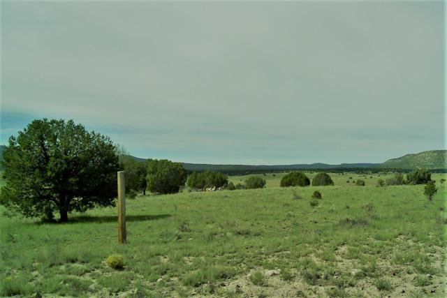 Thomas IV Road, Datil, NM 87821 (MLS #927089) :: Silesha & Company