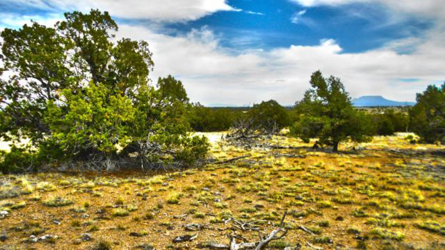 Lot 64 Golden Horseshoe Trail, Quemado, NM 87829 (MLS #928778) :: The Bigelow Team / Red Fox Realty
