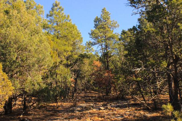 85 Carolino Canyon Road, Tijeras, NM 87059 (MLS #941511) :: The Buchman Group