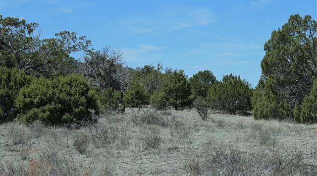 6 Fawn Circle, Datil, NM 87821 (MLS #965365) :: The Buchman Group