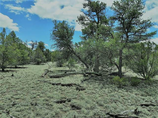 lots 32&34 Last Frontier Trail, Datil, NM 87821 (MLS #974527) :: The Buchman Group