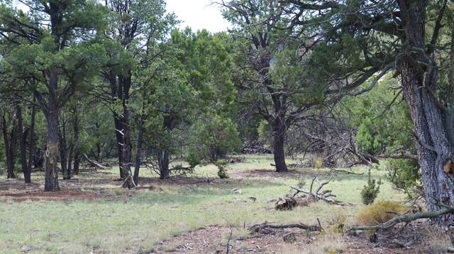 lot 6,7 Wilderness Circle, Datil, NM 87821 (MLS #976700) :: The Buchman Group
