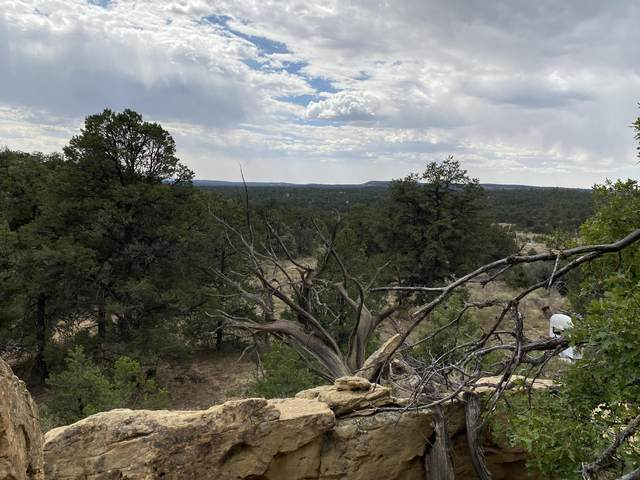 Lots 10-11 Old Well Road, Ramah, NM 87321 (MLS #977143) :: The Buchman Group