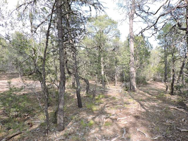 43 Tebbetts Road, Edgewood, NM 87015 (MLS #978375) :: Keller Williams Realty