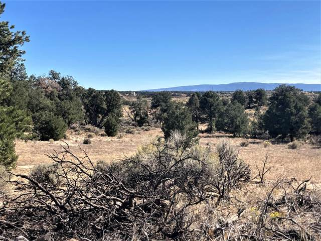 Badland Vista - Hunt Or Camp, Lindrith, NM 87029 (MLS #980642) :: The Bigelow Team / Red Fox Realty