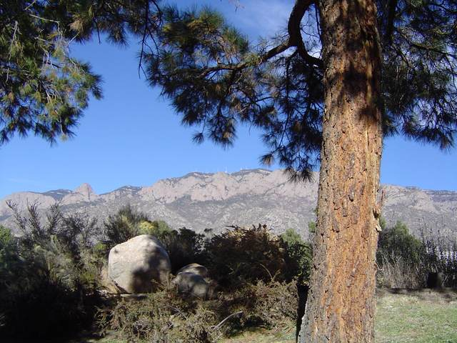 785-1 Tramway Lane NE, Albuquerque, NM 87122 (MLS #980828) :: Keller Williams Realty