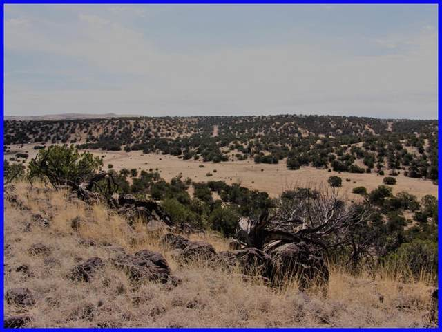 Lot 7 Powerline Road, Quemado, NM 87829 (MLS #986377) :: Campbell & Campbell Real Estate Services