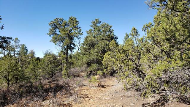 U1 Lot 32 Wild Horse Ranch, Pie Town, NM 87827 (MLS #989690) :: Campbell & Campbell Real Estate Services