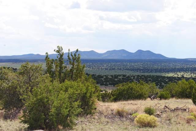44 Lost Calf Lane, Magdalena, NM 87825 (MLS #993229) :: Keller Williams Realty