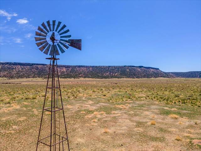 104 Orona Road, Quemado, NM 87829 (MLS #993409) :: Campbell & Campbell Real Estate Services