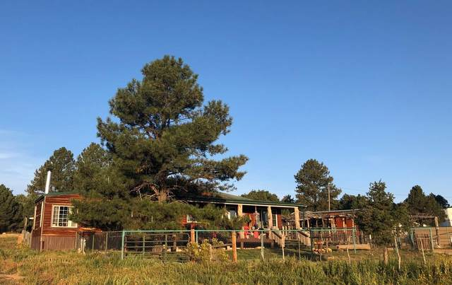 10 Lasso Lane, Pie Town, NM 87827 (MLS #994061) :: Campbell & Campbell Real Estate Services