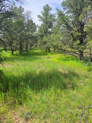 114 Homestead Trail, Datil, NM 87821 (MLS #998074) :: Campbell & Campbell Real Estate Services