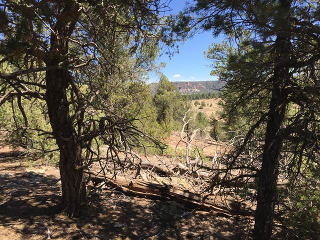 Lot 6 Sagebrush Road, Ramah, NM 87321 (MLS #919528) :: The Buchman Group