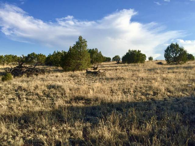 195 Campfire Road, Magdalena, NM 87825 (MLS #923749) :: Campbell & Campbell Real Estate Services