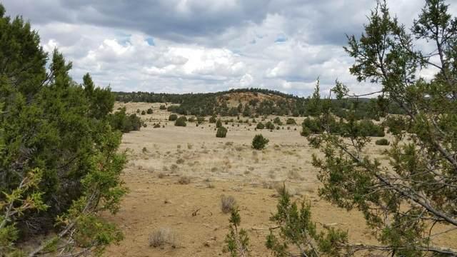 U4 Lot 89 Wild Horse Ranch, Pie Town, NM 87827 (MLS #924622) :: The Bigelow Team / Red Fox Realty