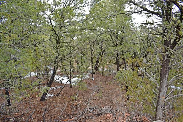 Lot 18 Tecolote Loop, Tajique, NM 87016 (MLS #958663) :: The Bigelow Team / Red Fox Realty