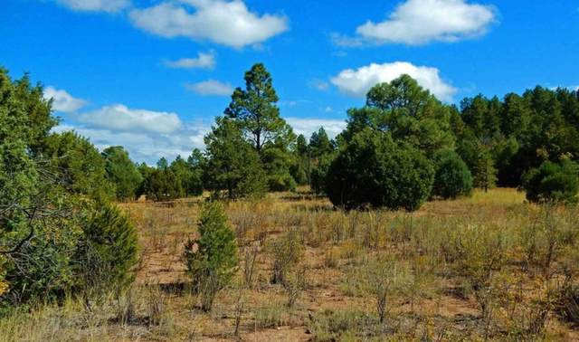 11 Calle Del Cedro, Sandia Park, NM 87047 (MLS #970544) :: Campbell & Campbell Real Estate Services