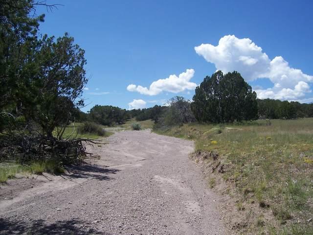 51 Camino Del Sueno, Magdalena, NM 87825 (MLS #991604) :: Campbell & Campbell Real Estate Services