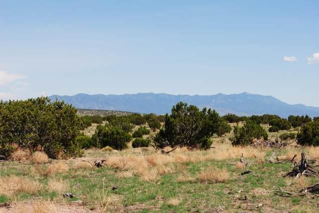 185 Campfire Road, Magdalena, NM 87825 (MLS #995249) :: Keller Williams Realty