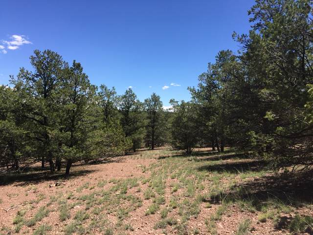 165 Homestead Trail, Datil, NM 87821 (MLS #894073) :: The Buchman Group
