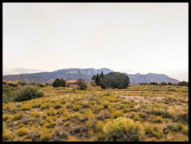 Ocate Court, Placitas, NM 87043 (MLS #905792) :: Campbell & Campbell Real Estate Services